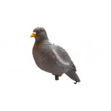 Підсудний голуб Birdland