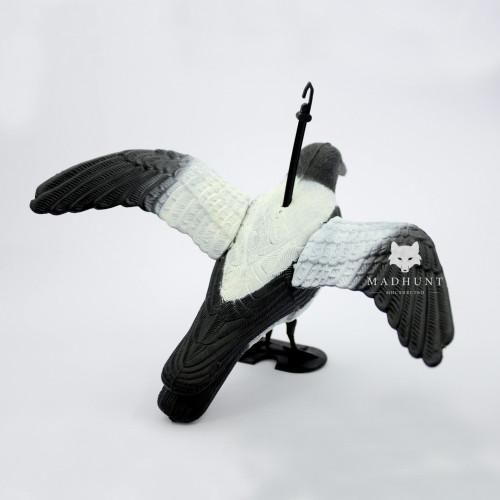 Ворона серая крылья распущены  - Фото 2