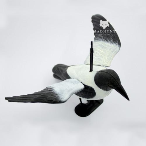 Ворона серая крылья распущены  - Фото 3